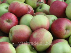 Apples Ligol (Ligol)