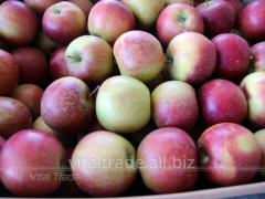 Apples Elisa (Eliza)