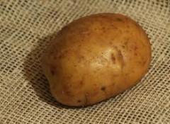 Семена картофеля оптом
