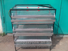 Cage for quails of KP-1-3