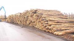 Rudstoyka (rack miner) coniferous breeds (pine)