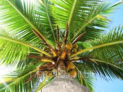 Масло (Жир) пальмовый технический