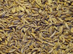 Kumin (zira) seeds