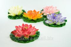 Cm lotus / Flower / d=17 / the 60th petals / color