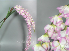 Orchid / 2 branches / 1,75 m / 62 flowers / 7