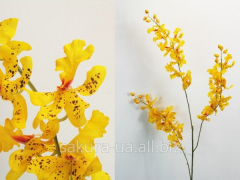 Orchid / 1,2 m / Yellow e30116