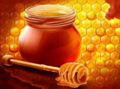 Honey podsolnechnikovy, Honey wholesale from 10 to