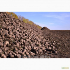 Beet sugar on a basis to be provided