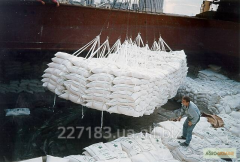 Reed white sugar from 10 000 MT