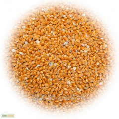 Millet of 200 tons
