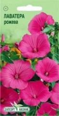 Semyon Lavatera of pink