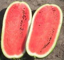 CHARLESTON HEAT water-melon seeds