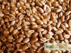 Wheat of fodder 2000 tons
