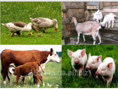 Preparations of different groups of veterinary