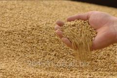 Grain fodder from Resursi Group, TOV