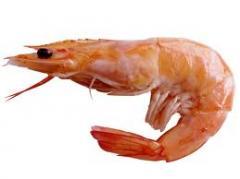 Shrimps fresh-frozen, TM
