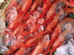 Seafood frozen, Fresh-frozen products of