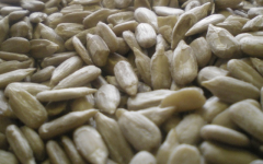 Kernel of seeds of sunflower confectionery
