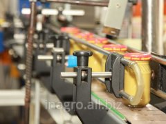 Equipment for production of mustard, line for