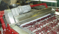 Pitting machine of berries on production on