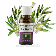 Oil of tea tree cosmetic. Tea Tree Oil