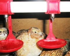 Поилки для домашних птиц