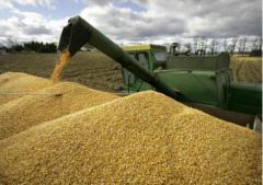 Grain export, impor