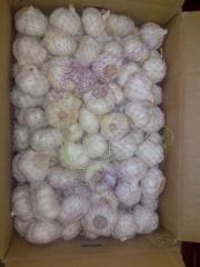 Price garlic