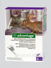 Advanteydzh 80 for kot_v to a b_lsha of 4 kg