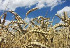 Wheat, corn for export, impor