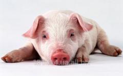 Комбикорм для свиней (розсипной)