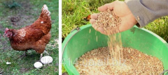 Compound feed for laying hens (granule)