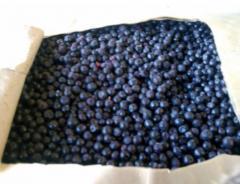 The blackcurrant frozen