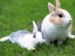 Комбикорм для кроликов ТМ «Feed Life» ПК 92-1