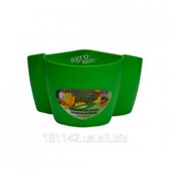 Вазон Кактус на 3 растения зеленый
