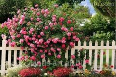 Fences wooden for a garden, giving