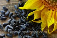 Семена подсолнечника Жалон/ Насіння...