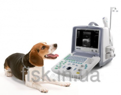 Portable ultrasonography the device with 2