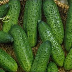 Cucumber Ajax of 1000 pages of Nunhems