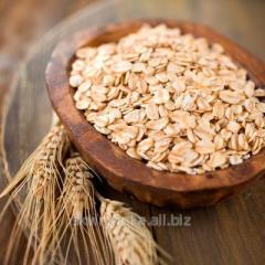 Grain of v_vsyan of plyushchen