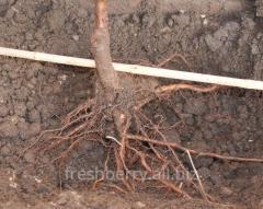 Materiais para plantação