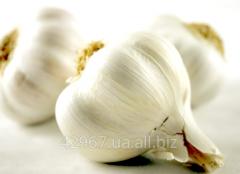 Garlic 1 grade (China)