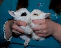Кролик декоративный