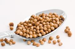 Coriander grains. Coriander grain. Cilantro