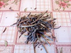 Ветки смородины для чая.
