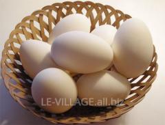 Jaja gęsie wylęgowe
