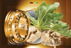 Hybrid of sugar beet Attak