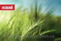 Winter barley hybrid Hobbit