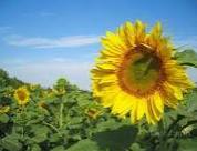 Liquid, organic, ecologically safe fertilizer of