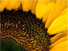 Семена подсолнечника и другие сельскохозяйственные